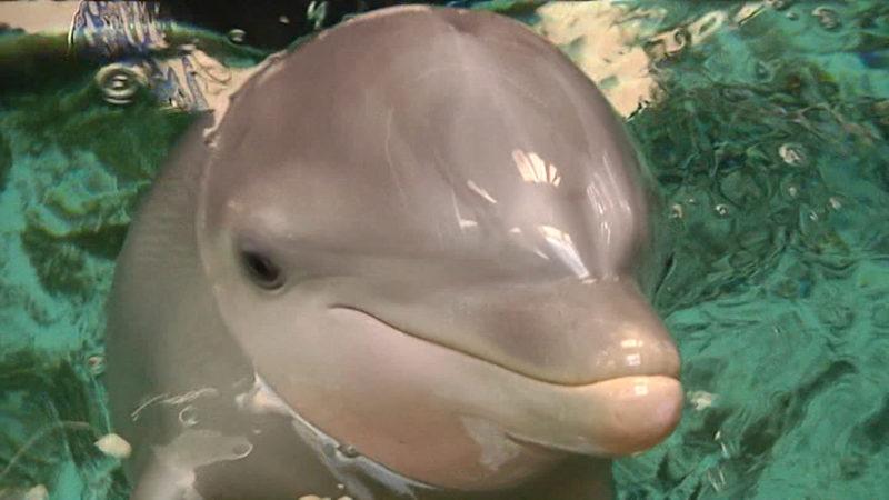 Lösegeld für Delfine (Foto: SAT.1 NRW)