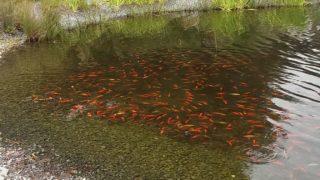 Fisch-Plage in Dinslaken (Foto: SAT.1 NRW)