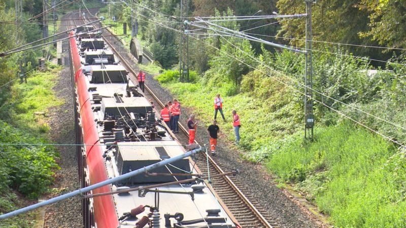 Chaos wegen Federvieh (Foto: SAT.1 NRW)