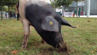Bauern kämpfen gegen Monsanto-Kauf (Foto: SAT.1 NRW)