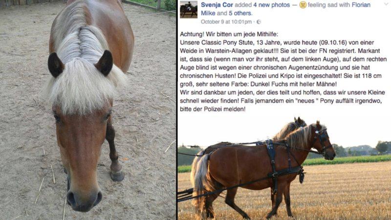 Krankes Pony geklaut (Foto: SAT.1 NRW)