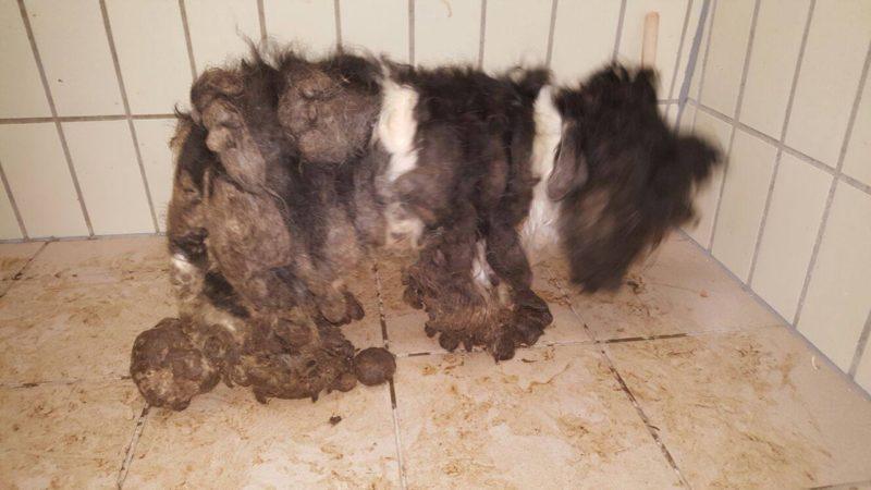 Tierquälerei: Hunde voller Kot (Foto: Tierherberge Kamp-Lintfort)