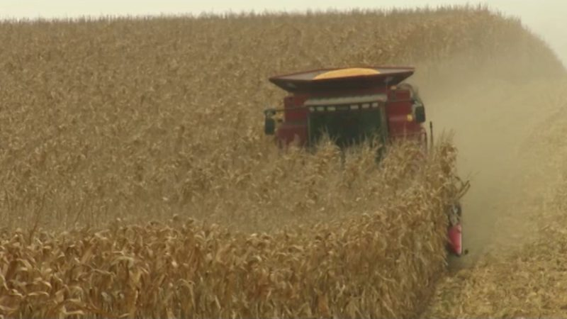 Keine Gentechnik bei Monsanto (Foto: SAT.1 NRW)