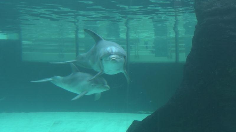 Alle Delfine endlich vereint (Foto: SAT.1 NRW)