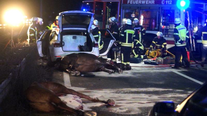 Böller auf Pferde geworfen (Foto: Telenews Network)