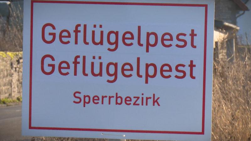 Vogelgrippe = Kulturgrippe (Foto: SAT.1 NRW)