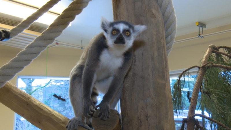 Zoos in Corona-Sorge (Foto: SAT.1 NRW)