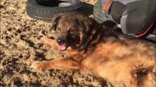 Hund Mitch schon sein halbes Leben im Tierheim (Foto: SAT.1 NRW)