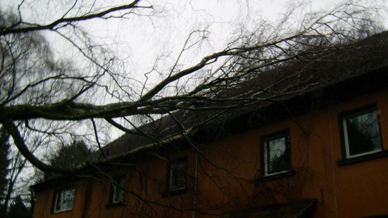 Baum kracht auf Mehrfamilienhaus (Foto: SAT.1 NRW)