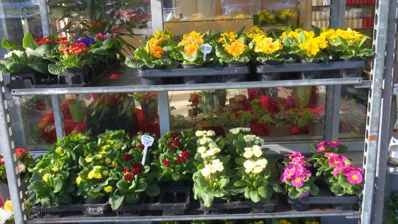 Diese Blumen können Sie schon jetzt pflanzen (Foto: SAT.1 NRW)