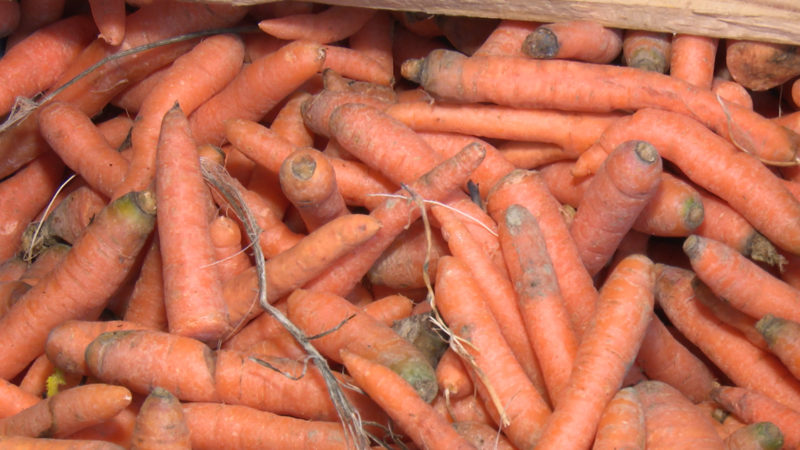 Ein Herz für krummes Gemüse (Foto: SAT.1 NRW)