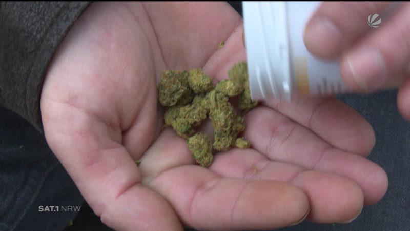 Cannabisagentur (Foto: SAT.1 NRW)