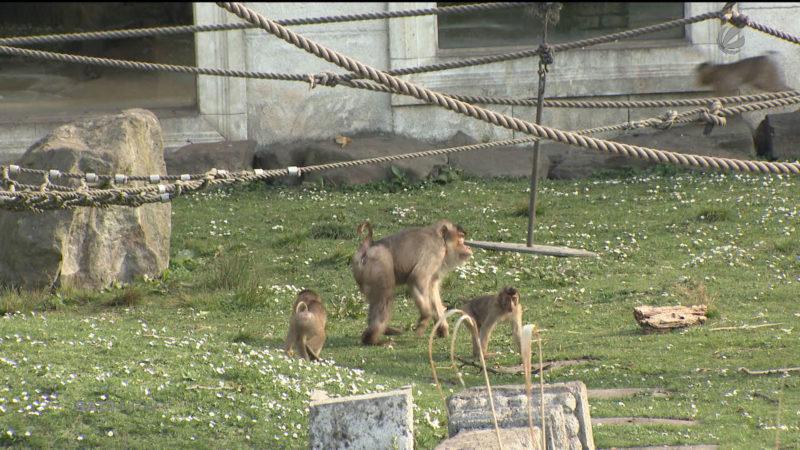 Mega-Hitze im Zoo (Foto: SAT.1 NRW)