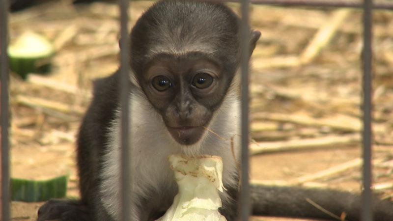 Seltenes Affenbaby im Zoo Duisburg (Foto: SAT.1 NRW)