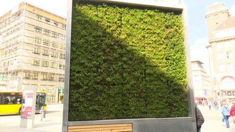 Mooswand für saubere Luft (Foto: SAT.1 NRW)