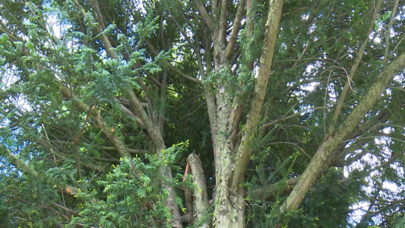 Aktion: Wald gießen (Foto: SAT.1 NRW)