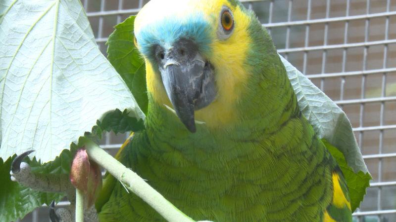 Papagei singt für Blondinen (Foto: SAT.1 NRW)