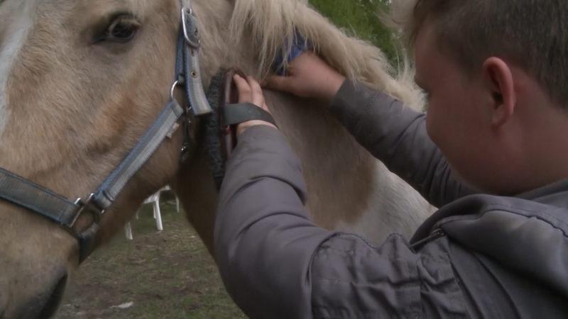 Unbekannter schießt mit Luftgewehr auf Pony (Foto: SAT.1 NRW)