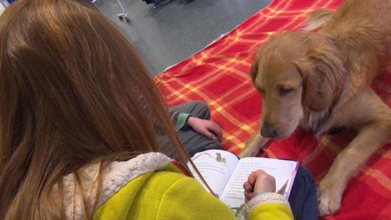 Hund animiert Kinder zum Vorlesen (Foto: SAT.1 NRW)