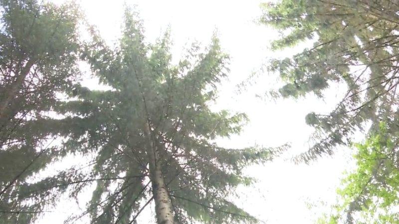 Bäume der Zukunft (Foto: SAT.1 NRW)
