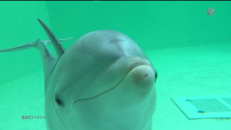 Bruder kämpft für Delphintherapie (Foto: SAT.1 NRW)