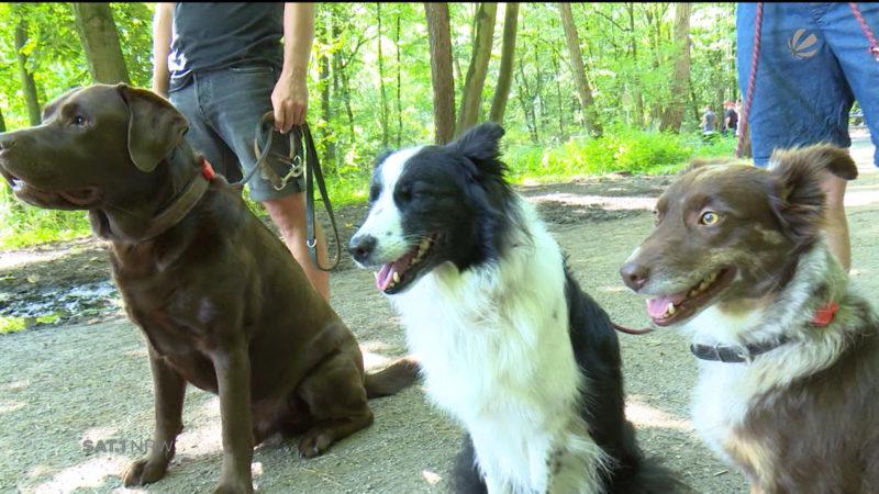 Fitnessarmband für Hunde (Foto: SAT.1 NRW)
