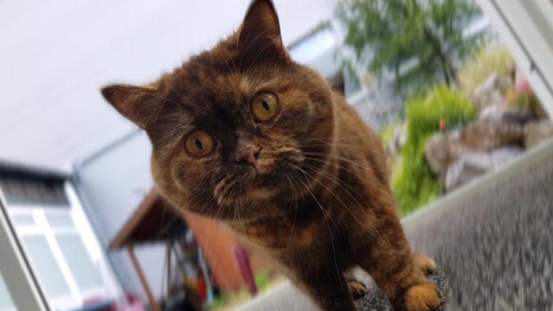 Katzen aus brennender Wohnung gerettet (Foto: SAT.1 NRW)