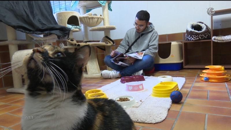 Katzen-Vorleser im Tierheim (Foto: SAT.1 NRW)