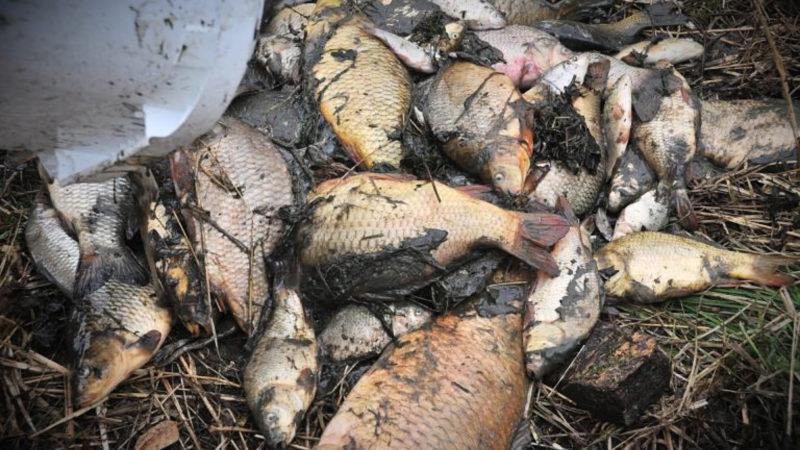 Umwelt-Skandal (Foto: SAT.1 NRW)