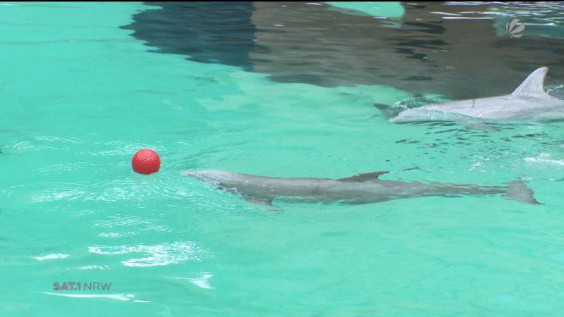 Delfinbaby im Duisburger Zoo verstorben (Foto: SAT.1 NRW)
