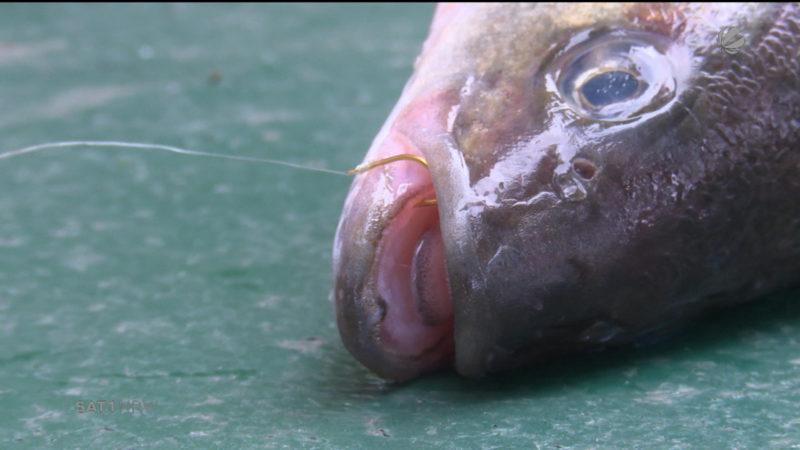 Hoffnung für den Aasee: Es gibt noch Fische (Foto: SAT.1 NRW)
