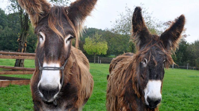 Kostenlose Ausflugstipps für die Herbstferien (Foto: Tierpark Weeze)