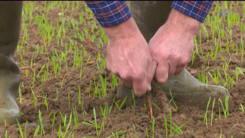 Glyphosat-Verbot für die Landwirtschaft (Foto: SAT.1 NRW)