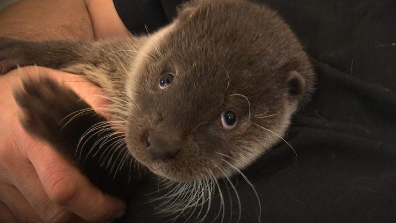 Neue Familie für Otter Baby (Foto: SAT.1 NRW)