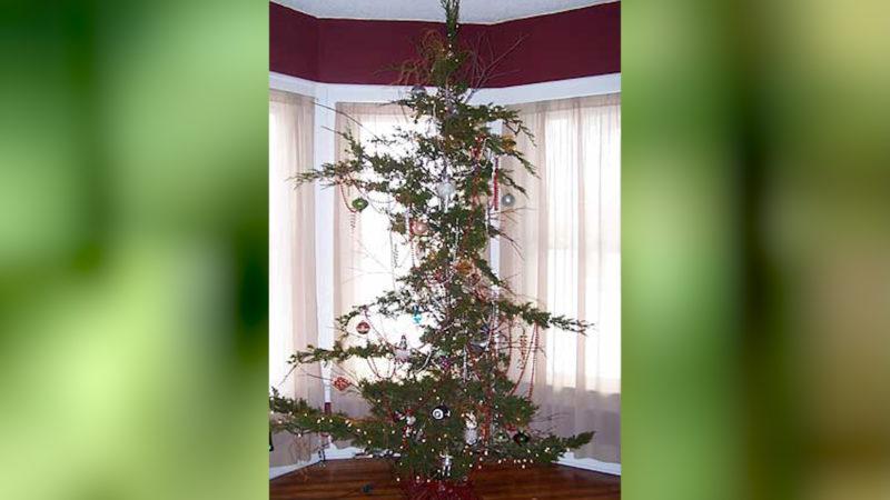 Das ist wohl der mickrigste Weihnachtsbaum aller Zeiten. (Foto: SAT.1 NRW)