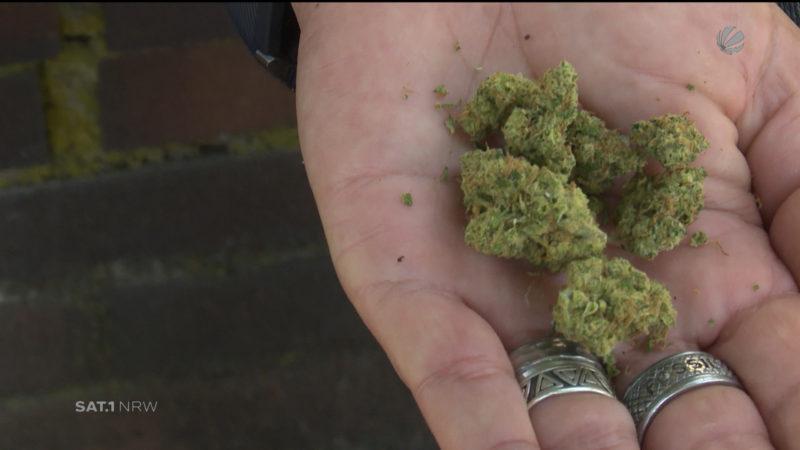 Forsa-Umfrage: Mehrheit gegen Cannabis-Legalisierung (Foto: SAT.1 NRW)