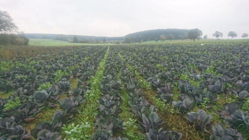 Biobauer klagt wegen Pflanzenschutzmitteln (Foto: Privat)