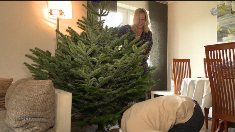 SAT.1-NRW-Weihnachtsbaum findet ein zu Hause (Foto: SAT.1 NRW)