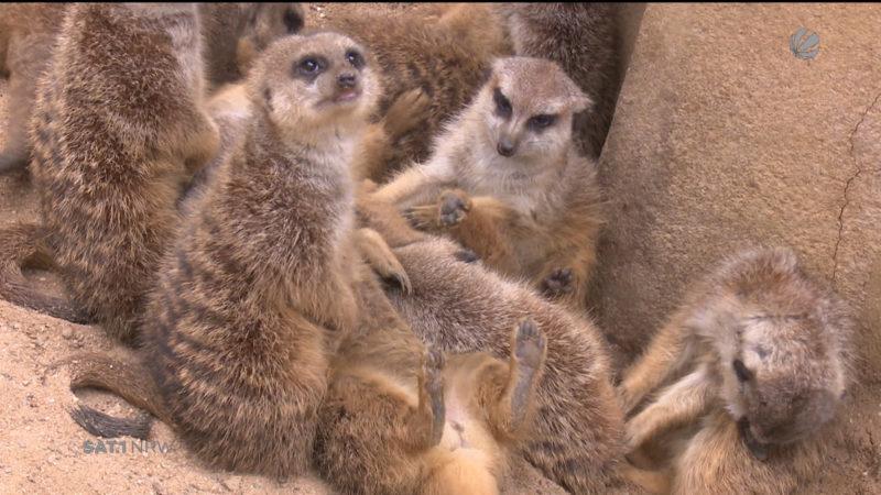 Zootiere bereiten sich auf den Winter vor (Foto: SAT.1 NRW)