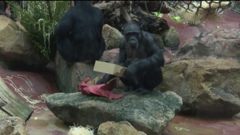 Weihnachten im Zoo (Foto: SAT.1 NRW)