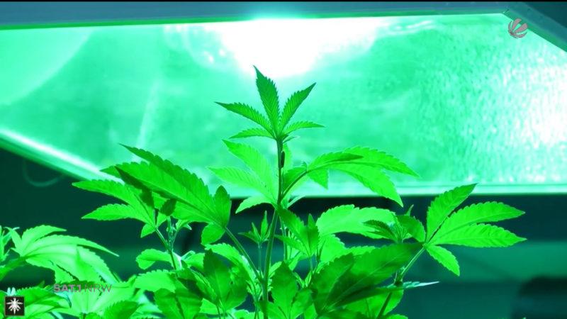 Große Nachfrage: Cannabis auf Rezept (Foto: SAT.1 NRW)