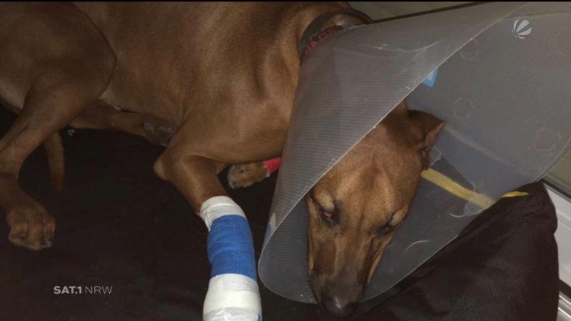 In Hundehotel: Hund verletzt sich schwer (Foto: SAT.1 NRW)