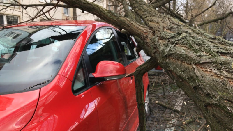 Sturmschäden: Was jetzt? (Foto: SAT.1 NRW)