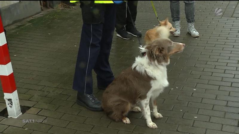 Hunde und Kaninchen aus Messi-Wohnung gerettet (Foto: SAT.1 NRW)