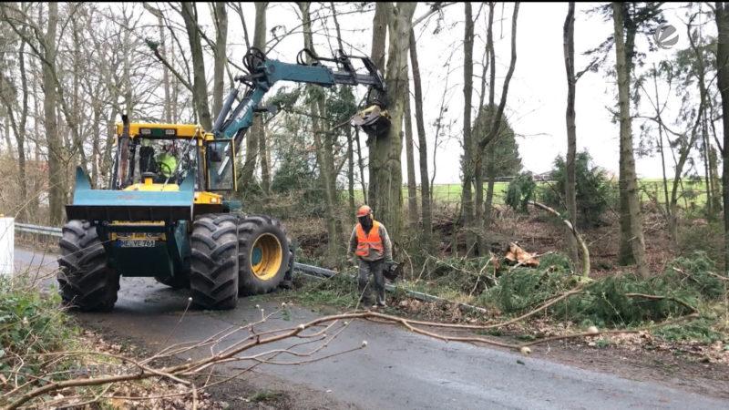 Sturmtief-Folgen in der Forstwirtschaft (Foto: SAT.1 NRW)