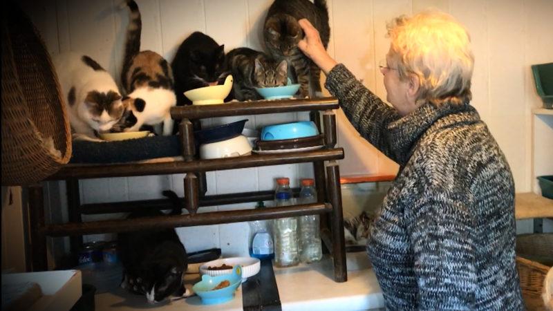 Ein Herz für Katzen (Foto: SAT.1 NRW)