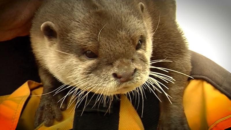 Otter Nemo ist tot (Foto: SAT.1 NRW)