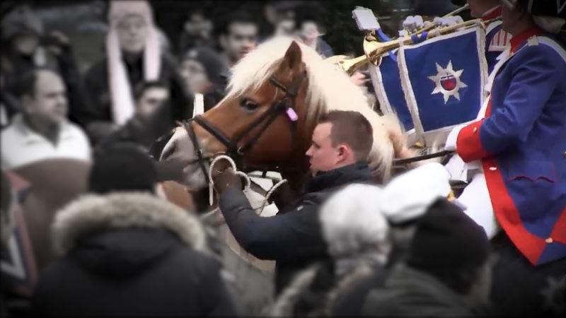 Pferde im Karneval (Foto: SAT.1 NRW)