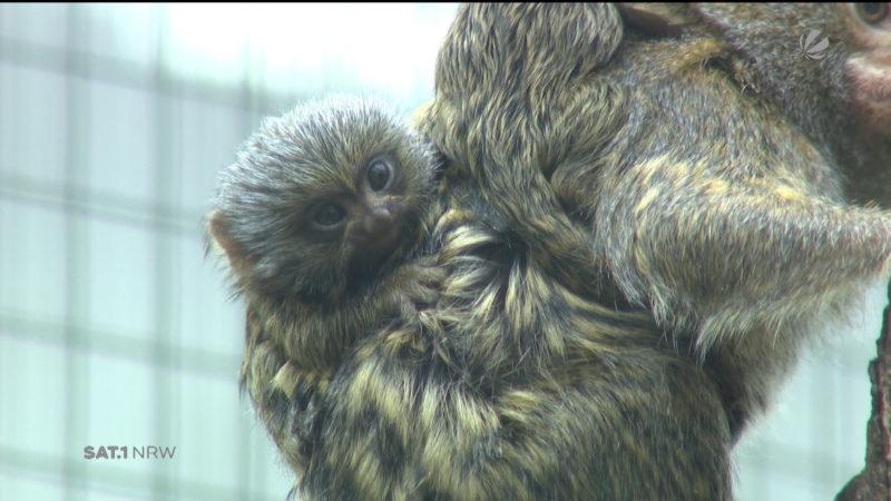 Nachwuchs im Zoo Dortmund (Foto: SAT.1 NRW)