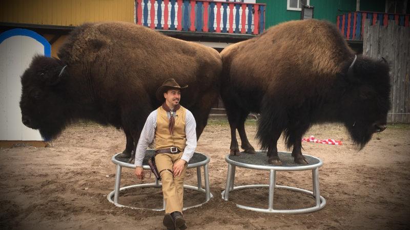 Tanzende Bisons (Foto: SAT.1 NRW)